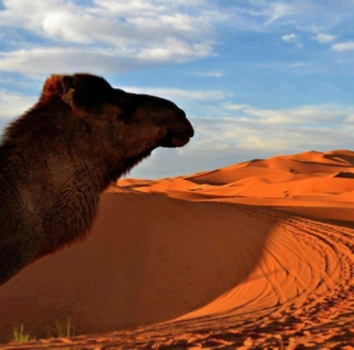 2 days Excursion from Agadir to Tamraght desert