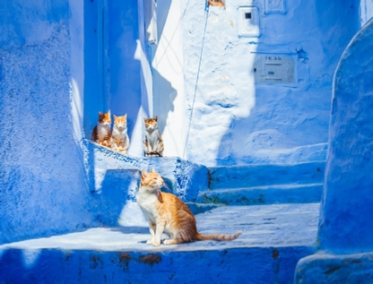 3 Days Casablanca to Chefchaouen and Marrakech